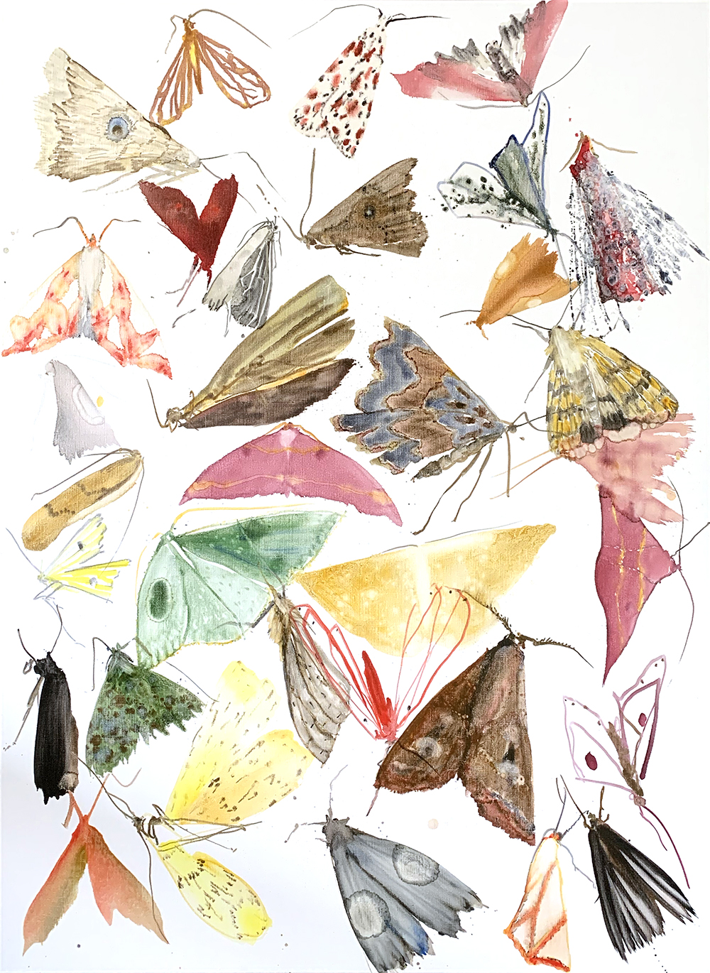 Moths - Metamorphosis 2