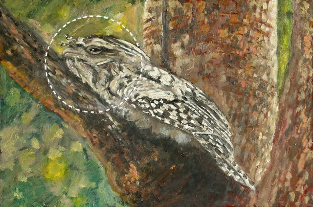 Tawny Frogmouth: Alive