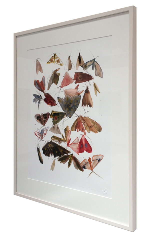Moths 10 in frame
