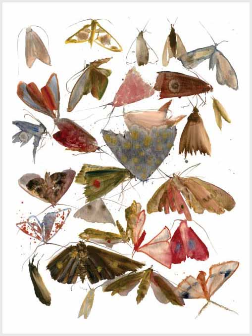 Allyson Reynolds Moths 10 Print