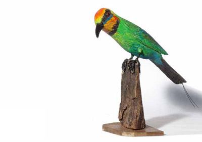 Artist   Ted Barraclough Title  Rainbow Bee Eater  2010