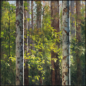 Artist 	A. J. Taylor Title 	Mapleton 5 Year 	2011 Medium 	oil Support 	board Height 	183cm Width 	183cm